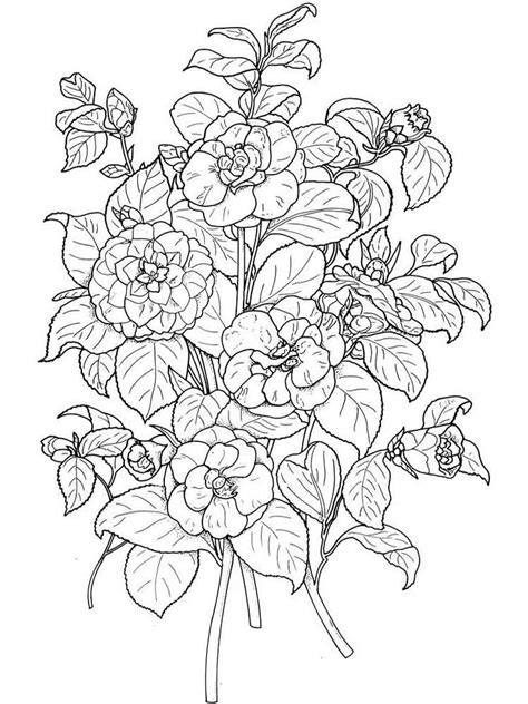 camellia flower coloring pages   print
