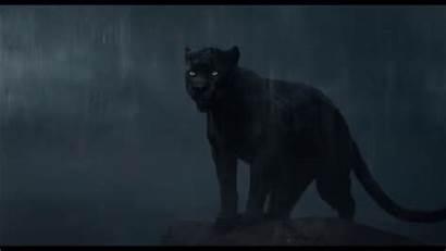 Bagheera Jungle Fanpop Character Favorite