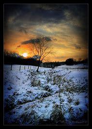 Most Beautiful Tree Photography