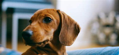 uebergang von welpen zu erwachsenen hundefutter perfect fit