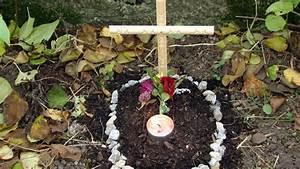 Tiere Im Garten Begraben : katze oder hund im eigenen garten begraben darf man das ~ Lizthompson.info Haus und Dekorationen