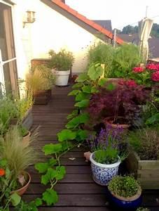 Gemüse Auf Dem Balkon : meine ernte gem se am balkon ~ Lizthompson.info Haus und Dekorationen