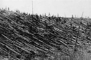 Mystery solved: meteorite caused Tunguska devastation