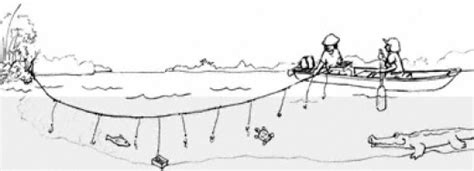food catfishing   trotline hubpages