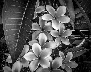 """Nature in Black and White"" Story and Pictures -- National ..."