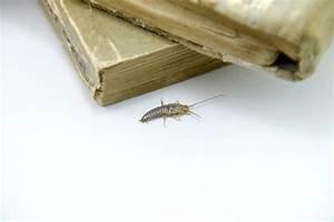 Wie Wird Man Mäuse Im Haus Los : silberfische woher kommen sie und wie wird man sie los ~ Lizthompson.info Haus und Dekorationen