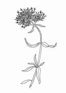 Flower Drawings Tumblr - Pencil Art Drawing