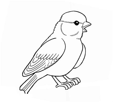 sparrow coloring pages    print