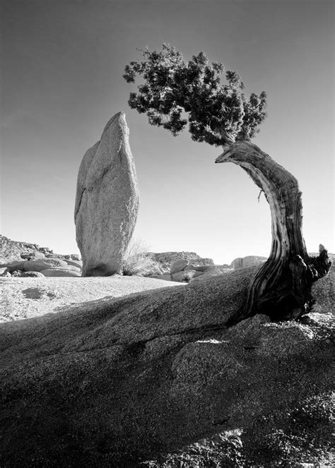 ansel adams - Google Search … | Photos I like | Ansel…