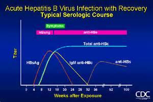 Hepatitis B Infection Pictures  Hepatitis Infections