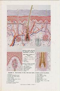 41 Best Anatomy  U0026 Physiology Images On Pinterest