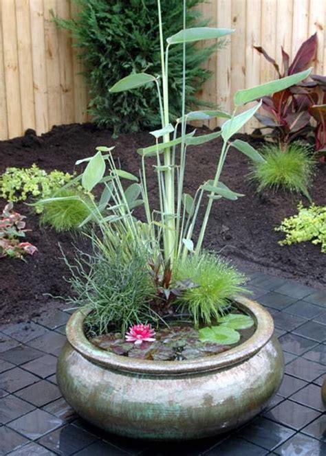 les 25 meilleures id 233 es concernant plantes aquatiques sur plantes aquatiques