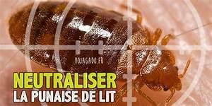 Fumigène Punaise De Lit : punaises de lit comment lutter vojagado ~ Melissatoandfro.com Idées de Décoration