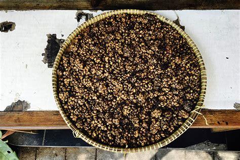 canapé le plus cher du monde kopi luwak le caf 233 le plus cher du monde 224 base de crottes