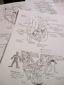Anatomical  Studying  Diagrams  Heart  Anatomy  Medicine