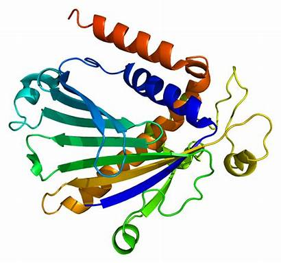 Protein Transfer Phosphatidylinositol Wikipedia Alpha Pdb Structures