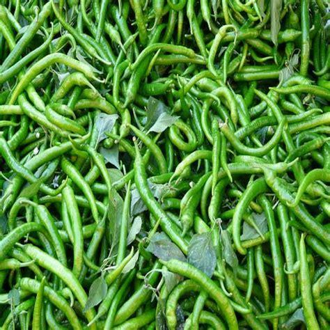 koleksi jenis sayuran dalang lettuce jual sayuran segar