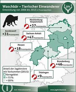 Waschbären In Deutschland : waschb ren vertreiben mein sch ner garten ~ Frokenaadalensverden.com Haus und Dekorationen