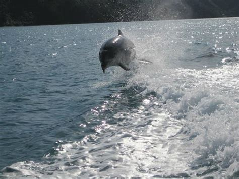 Picton Boat Trips by Boat Charters Picton New Zealand Top