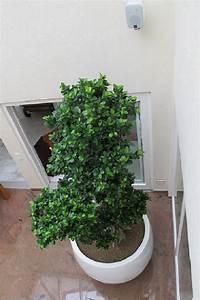 Bonsai Kaufen Berlin : gro e xxl ficus microcarpa bonsai pflanzen aus asien online kaufen ~ Orissabook.com Haus und Dekorationen