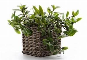 Zimmerpflanzen Für Kinderzimmer : welche pflanzarten geh ren ins kinderzimmer ~ Orissabook.com Haus und Dekorationen