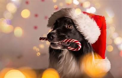 Christmas Dog Santa Merry Funny Hat Border