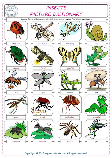 esl printable insects english worksheets