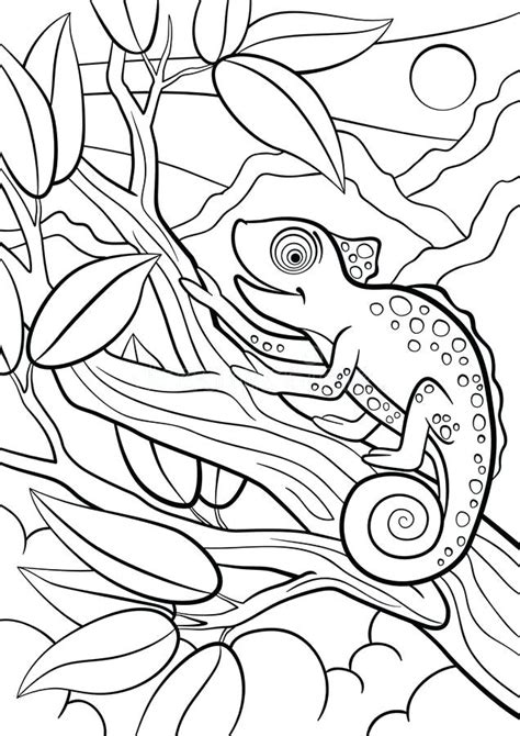 chameleon coloring pages  coloring pages  kids