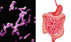 Stomach Bug Breakthrough  Scientist Grow Bacteria From