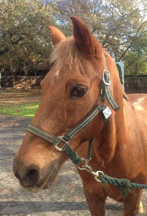 horse boomer project therapy