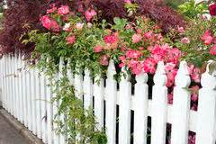 Garden Fence Pink Roses Stock Photos, Images, & Pictures