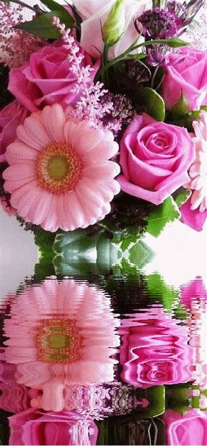 Flowers Flower Nature Exotic Rose Animated Animation