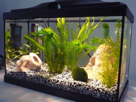 aquarium de 20l et poissons aquariums et vivariums forum animaux