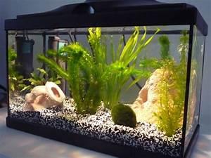 Liter Aquarium Berechnen : d coration aquarium 20l ~ Themetempest.com Abrechnung