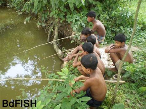 fishing technique  rural areas  northern bangladesh