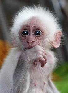 Baby Animal Funny Quotes. QuotesGram