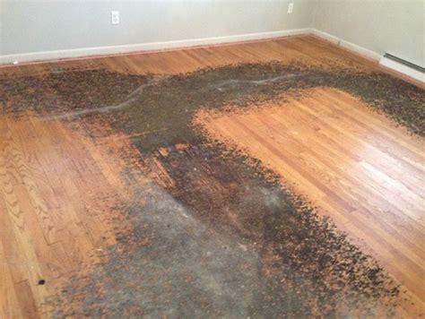 best way to remove hardwood flooring how to remove residue from under carpet from h w floors
