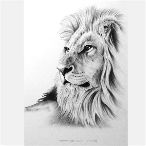 beautiful realistic lonely  lion king glazing proud