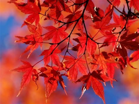 pictures of autumn leaves autumn leaves autumn wallpaper 22177653 fanpop