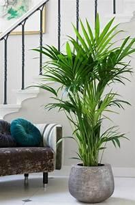 Pflanzen Für Flur : zimmerpalmen richtig pflegen tipps f r die kentia palme flur treppe pinterest kentia ~ Bigdaddyawards.com Haus und Dekorationen