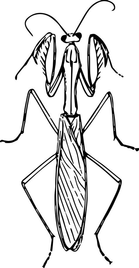 14 Best Mantis Clipart - Clipartion Animal Clipart