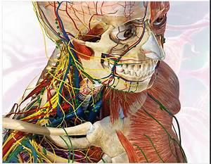 Visible Body 3d Human Anatomy Atlas 2 Pc Download
