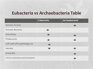 Archaebacteria Vs Eubacteria Venn Diagram