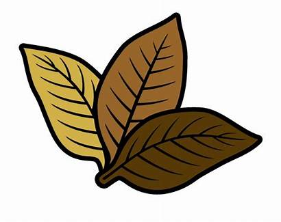 Tobacco Leaf Clipart Clip Livestock Agriculture Vippng