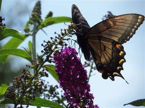 juicy beauty word  easy butterfly hummingbird