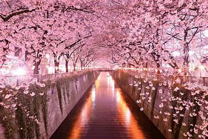 Aesthetic Water Trees Cherryblossom Liked Users
