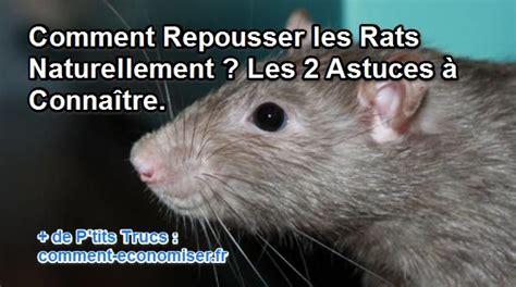 comment repousser les rats naturellement les 2 astuces 224 conna 238 tre