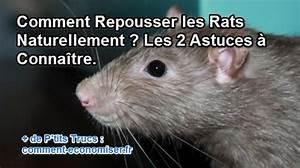 Comment Tuer Un Rat : comment repousser les rats naturellement les 2 astuces ~ Melissatoandfro.com Idées de Décoration
