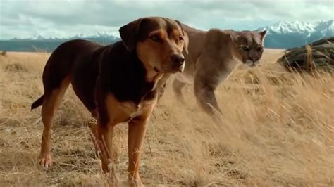dogs  home trailer hollywood reporter