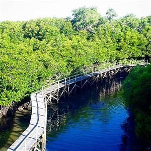 Taman Wisata Alam Mangrove